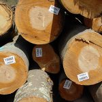 Beech Saw Logs
