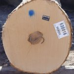 Hard Maple Veneer Logs
