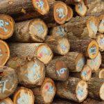 Hickory Saw Logs