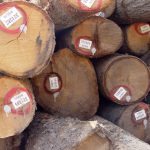 Red Oak Saw Logs