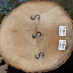 Red Oak Veneer Logs