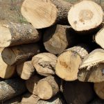 White Ash Saw Logs
