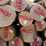 White Oak Saw Logs